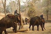 180px-ElephantTrainingCamp