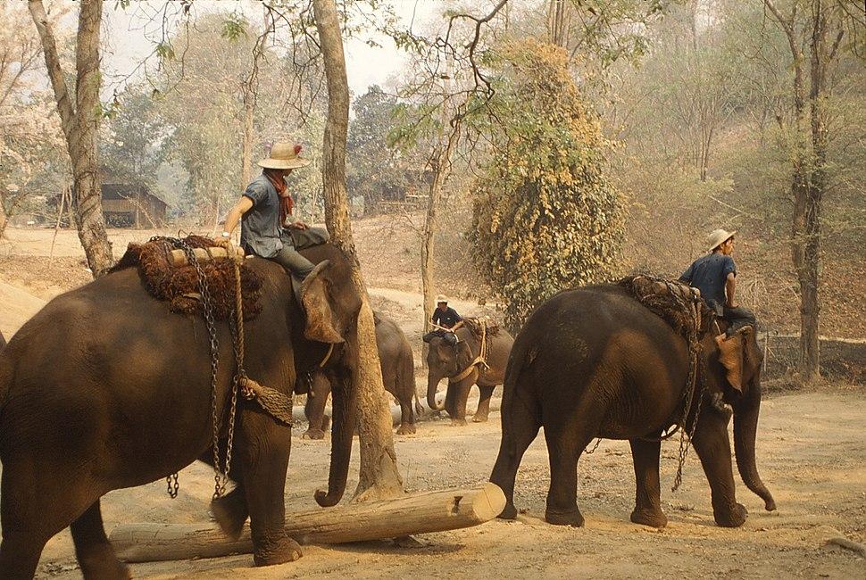 ElephantTrainingCamp