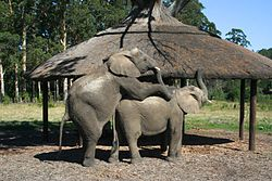 Elephant Style (6649538427).jpg