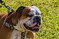 Encontro Dog Institute (41038152215).jpg