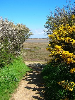 Entering Pagham Harbour - geograph.org.uk - 765616
