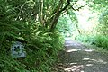 Entrance to Tremayne Woods - geograph.org.uk - 1380853.jpg