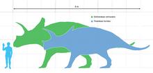 La stazza del Triceratops (in blu) in paragone con quella dell' Eotriceratops (in verde) e un umano