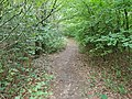 Epping Forest 20170727 112125 (49374920412).jpg