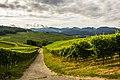 Erenkirhen vineyards - panoramio.jpg