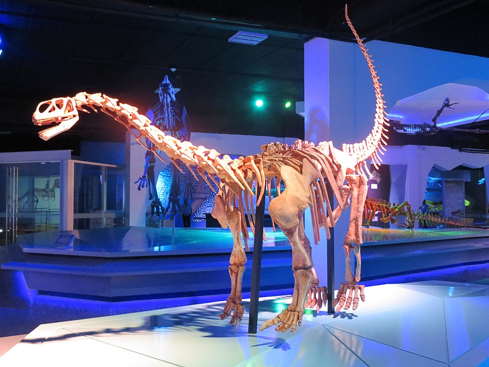 Esqueleto de Bellusaurus