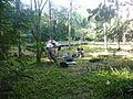 Explorando a floresta.JPG