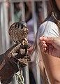 Expo Animales 2015 13 (133236177).jpeg