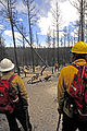 FEMA - 35105 - Firefighters look at smouldering trees in New Mexico.jpg