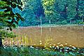 FFH DE 2949-302 Grumsiner Forst Redernswalde-07.06.2014-1.JPG