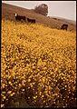 FLOWERS ALONG SWANTON ROAD - NARA - 543318.jpg