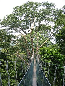 The FRIM canopy walkway which is now permanently closed. & Forest Research Institute Malaysia - Wikipedia
