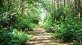 Fairytale walk through the woods - geograph.org.uk - 1071948.jpg