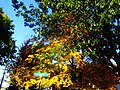 Fall Colors in Madison - panoramio (5).jpg