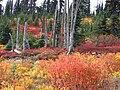 Fall colors (4b0833a56d6f4fd09d9dbbe8276f00af).JPG