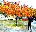 Fall in Hunza-basraa-22.jpg