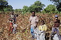 Famille champs de coton.jpg