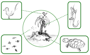 Fauna - Simplified schematic of an island's fauna – all its animal species, highlighted in boxes