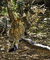 Feral Cat Bonaire.jpg