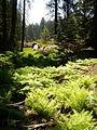 Fern grove 2.jpg