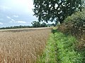 Field Edge Path - geograph.org.uk - 951283.jpg