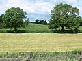 Field and trees alongside the A607 - geograph.org.uk - 853588.jpg