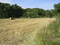 Field between the Beaulieu River and North Lane, New Forest - geograph.org.uk - 36624.jpg