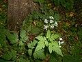 Finding Flowers in the Woods (9359365312).jpg