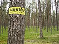 Finnish border zone sign on a tree.jpg