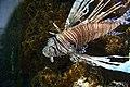 Fish (509151369).jpg
