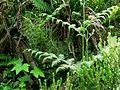 Flickr - brewbooks - John M's Garden (21).jpg