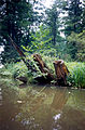 Fließ im Spreewald.jpg