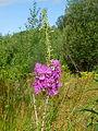 FloraHildenJune (9).JPG