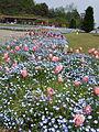 Flower-center134355.jpg