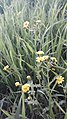 Flower11110.jpg