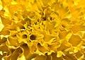 Flower (17707474958).jpg