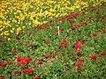 Flower feld 8.jpg