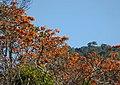 Flowering Tree - Flickr - gailhampshire.jpg