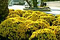 Flowers in Baku boulevard.JPG