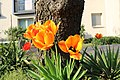 Flowers on Potsdam street 8 (April, 2018).jpg