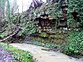 Foliage over sedimentary layers - geograph.org.uk - 1169000.jpg
