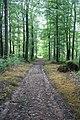 Follow The Trail.jpg