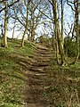 Footpath Steps leading towards Storeton. - geograph.org.uk - 734783.jpg
