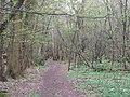 Footpath in Hartley Woods - geograph.org.uk - 1243205.jpg