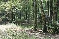 Forêt - panoramio (7).jpg