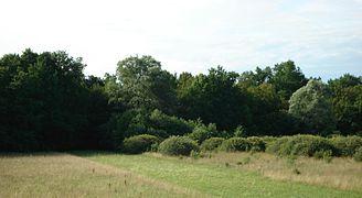 Forest Samobor.JPG