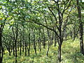 Forest in Nakhodka.JPG
