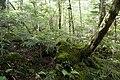 Forest in Yatsugatake 40.jpg