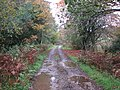 Forest road - geograph.org.uk - 1635669.jpg