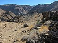 Forty Nine Palms Oasis Trail - panoramio.jpg
